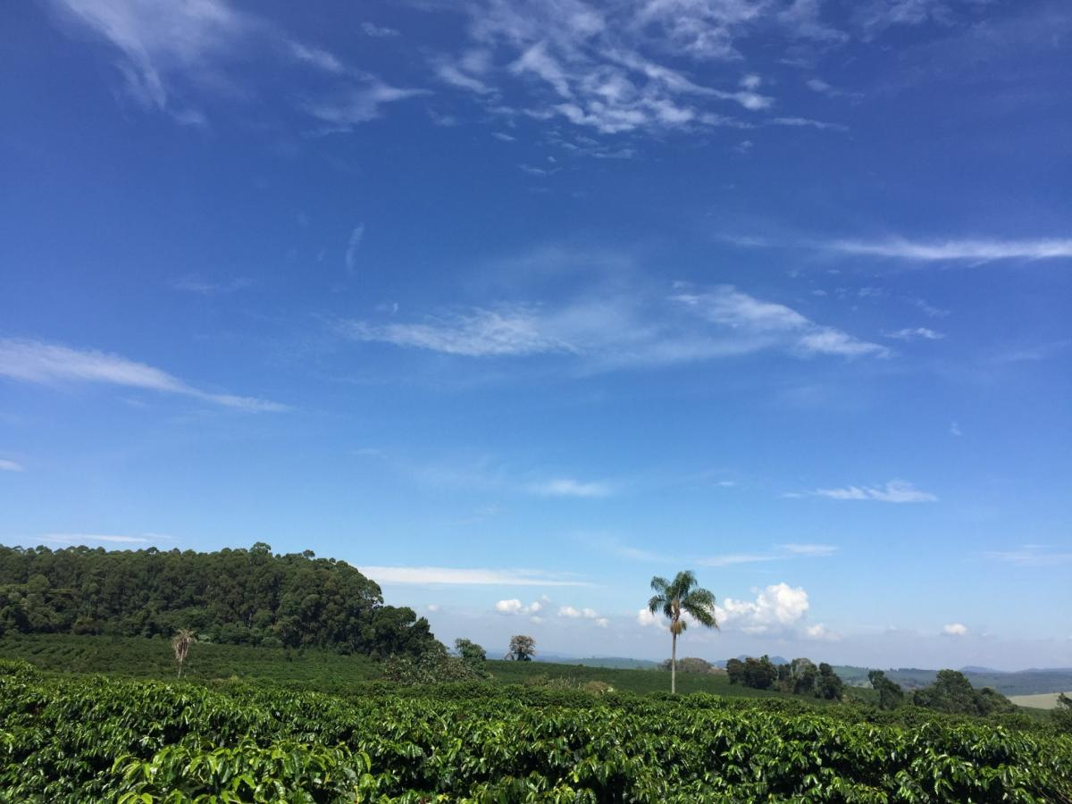 Coffee farm in Ibiraci